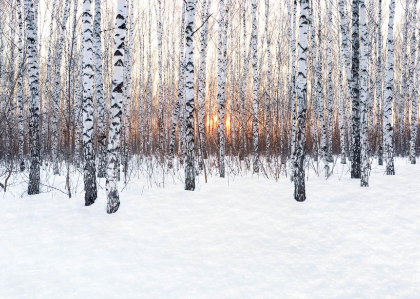 Three Reasons Why We Feel More Anxious in Winter / Alessandra Edwards